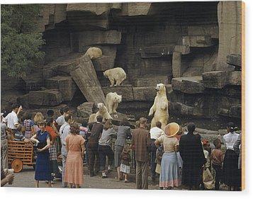 Tourists Watch Captive Polar Bears Wood Print by B. Anthony Stewart