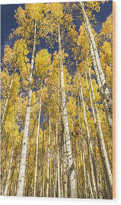Wood Print featuring the photograph Towering Aspens by Phyllis Peterson