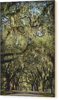 Towering Canopy Wood Print