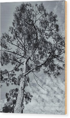 Wood Print featuring the photograph Towering by Linda Lees
