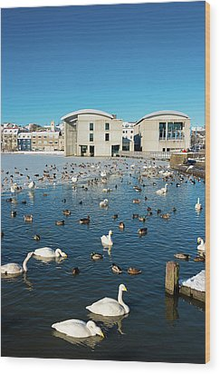 Town Hall And Swans In Reykjavik Iceland Wood Print by Matthias Hauser