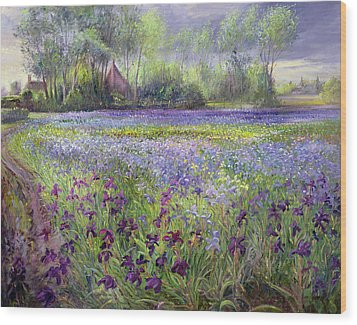 Trackway Past The Iris Field Wood Print by Timothy Easton
