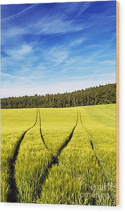 Tractor Tracks In Wheat Field Wood Print