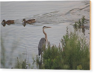 Tranquil Waterlife Wood Print by Cathy  Beharriell