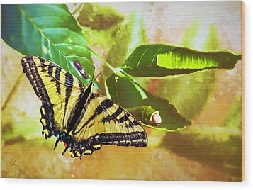 Wood Print featuring the photograph Transformation  by Diane Schuster