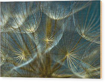 Translucid Dandelions Wood Print