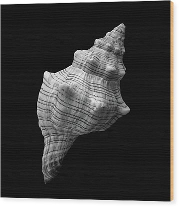 Wood Print featuring the photograph Trapezium Horse Conch Sea Shell by Jim Hughes