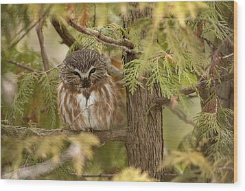 Wood Print featuring the photograph Treasures Of The Forest by Everet Regal