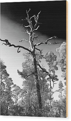 Wood Print featuring the photograph Tree At Halpatiokee by Don Youngclaus