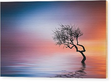 Tree At Lake Wood Print by Bess Hamiti