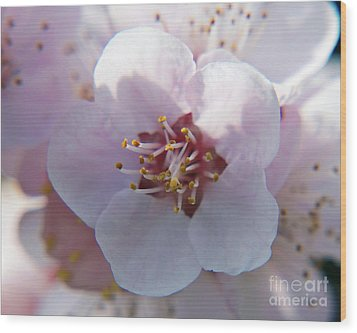 Wood Print featuring the photograph Tree Blossoms by Elvira Ladocki