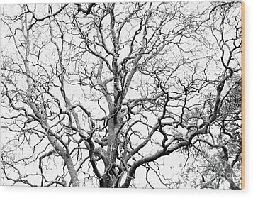 Tree Branches Wood Print by Gaspar Avila