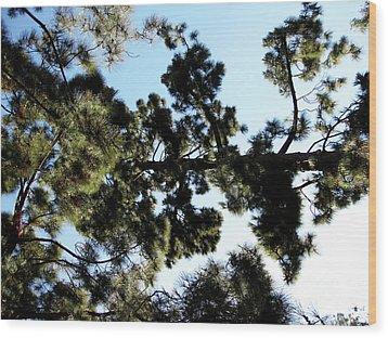 Tree Canopy Wood Print by Karen Sydney