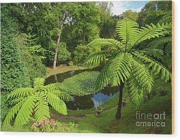 Tree Ferns Wood Print by Gaspar Avila