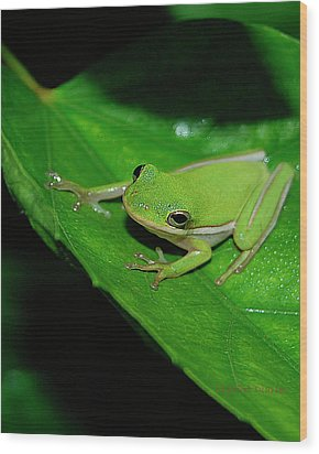 Tree Frog On Hibiscus Leaf Wood Print by DigiArt Diaries by Vicky B Fuller