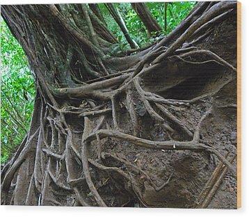 Tree From Manoa Falls Wood Print by Elizabeth Hoskinson