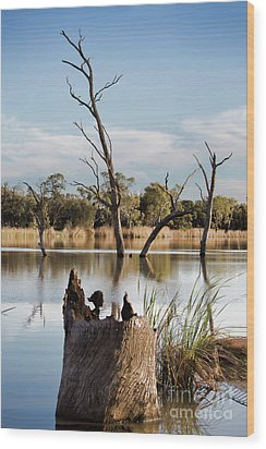 Wood Print featuring the photograph Tree Image by Douglas Barnard