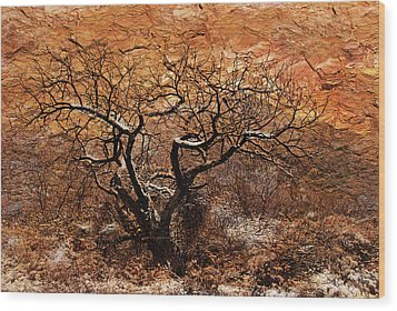 Wood Print featuring the photograph Tree In Winter by Barbara Manis