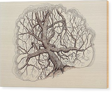 Wood Print featuring the drawing Tree In Winter II by Kerry Beverly