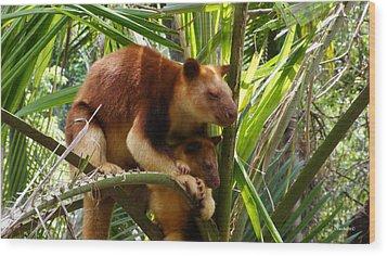 Tree Kangaroo 1 Wood Print by Gary Crockett