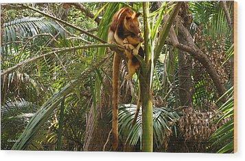 Tree Kangaroo 2 Wood Print by Gary Crockett