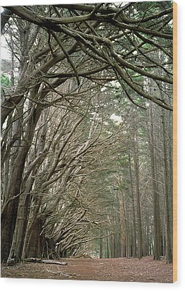 Tree Lane Wood Print by Art Shimamura
