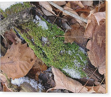 Wood Print featuring the photograph Tree Lichen by Scott Kingery