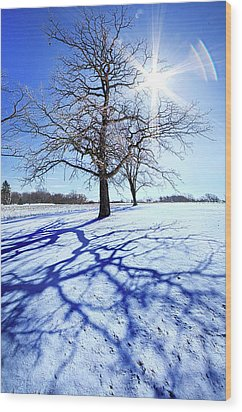 Wood Print featuring the photograph Tree Light by Phil Koch
