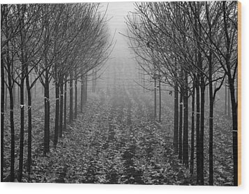 Tree Line Wood Print by David  Hubbs