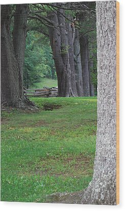 Wood Print featuring the photograph Tree Line by Eric Liller