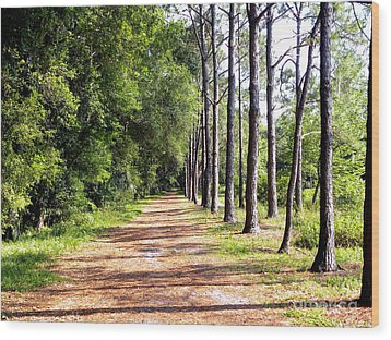 Tree Lined Path Wood Print