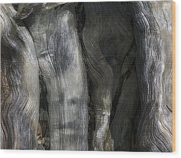 Wood Print featuring the photograph Tree Memories # 20 by Ed Hall
