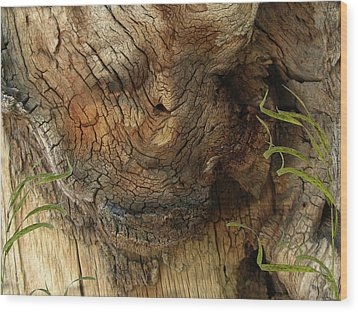 Wood Print featuring the photograph Tree Memories # 22 by Ed Hall