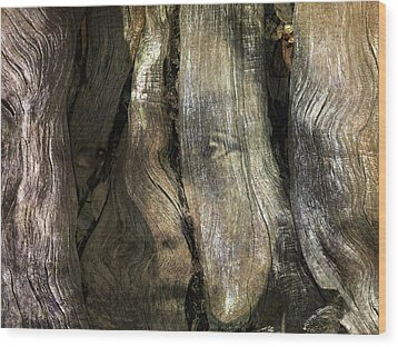 Wood Print featuring the photograph Tree Memories # 24 by Ed Hall
