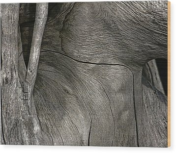 Wood Print featuring the photograph Tree Memories # 26 by Ed Hall