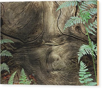 Wood Print featuring the photograph Tree Memories # 32 by Ed Hall