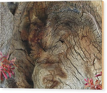 Wood Print featuring the photograph Tree Memories # 34 by Ed Hall