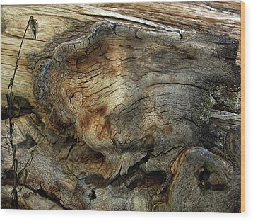 Wood Print featuring the photograph Tree Memories # 36 by Ed Hall