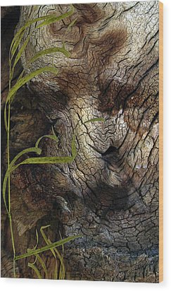 Wood Print featuring the photograph Tree Memories # 37 by Ed Hall