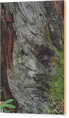 Wood Print featuring the photograph Tree Memories # 38 by Ed Hall