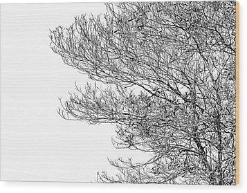 Tree No. 7-2 Wood Print