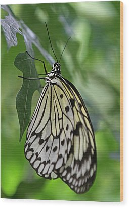 Tree Nymph Wood Print by Juergen Roth