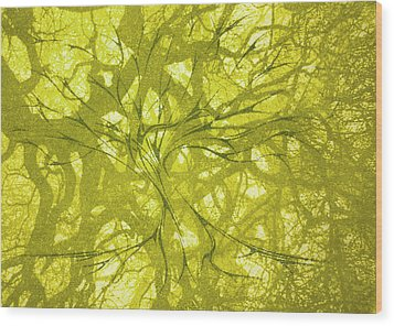 Wood Print featuring the mixed media Tree Of Life by Rachel Hames
