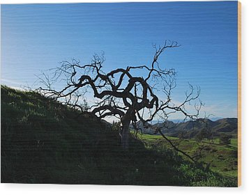 Wood Print featuring the photograph Tree Of Light - Landscape by Matt Harang