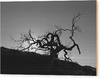 Wood Print featuring the photograph Tree Of Light Silhouette Hillside - Black And White  by Matt Harang