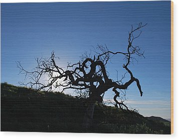 Wood Print featuring the photograph Tree Of Light Silhouette Hillside by Matt Harang