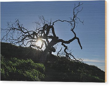 Wood Print featuring the photograph Tree Of Light - Sunshine Through Branches by Matt Harang