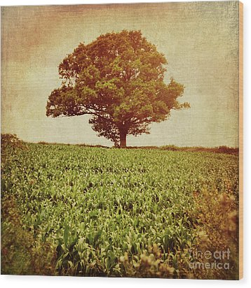 Wood Print featuring the photograph Tree On Edge Of Field by Lyn Randle