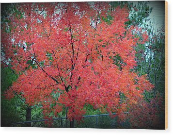 Wood Print featuring the photograph Tree On Fire by AJ Schibig