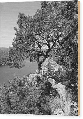 Tree On Mount Bonnell Wood Print by Lindsey Orlando